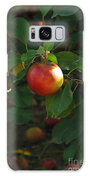 Apple On Tree Galaxy Case by Kathy Gibbons