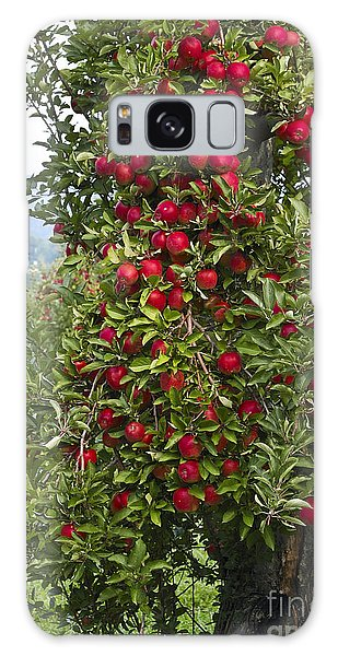 Apple Tree Galaxy Case