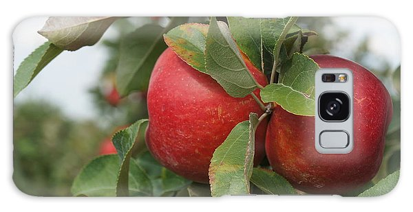 Apples On The Branch Galaxy Case