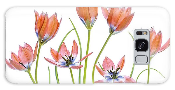 Tulip Galaxy S8 Case - Apricot Tulips by Mandy Disher