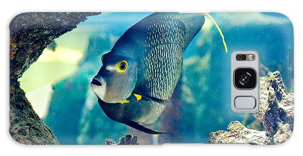 French Angelfish Galaxy Case