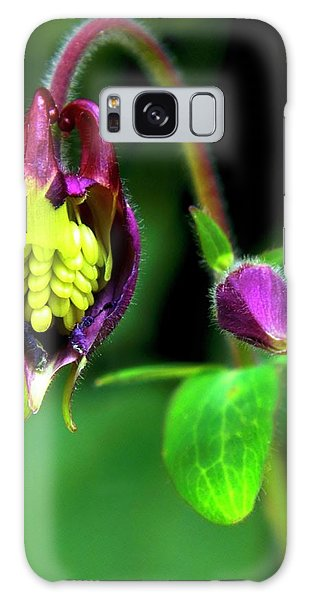 Aquilegia Galaxy Case - Aquilegia Flower Eaten By Pests by Ian Gowland
