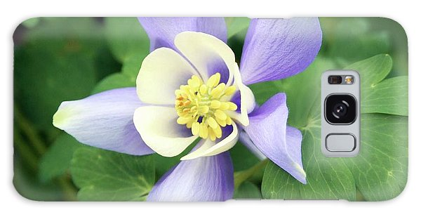 Aquilegia Galaxy Case - Aquilegia 'spring Magic Blue And White' by Ian Gowland/science Photo Library