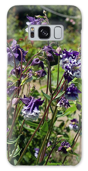 Aquilegia Galaxy Case - Aquilegia Vulgaris 'adelaide Addison' by Neil Joy/science Photo Library