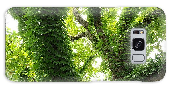Arboretum Galaxy Case by Gerald Hiam