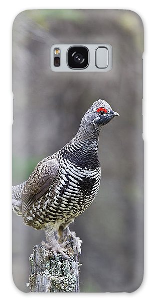 Boreal Forest Galaxy Case - Arctic, Alaska, A Male Spruce Grouse by Hugh Rose