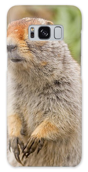 Arctic Ground Squirrel Close-up Galaxy Case