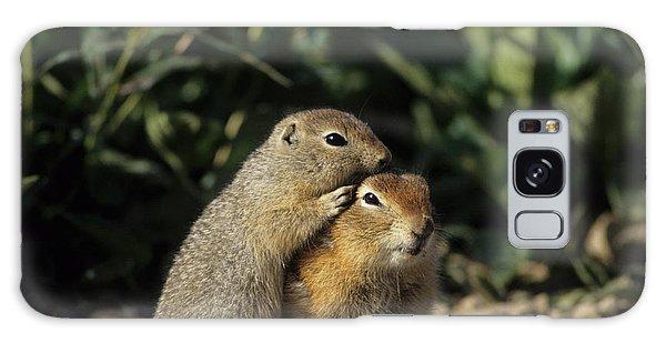 Denali Galaxy Case - Arctic Ground Squirrel, Denali National by Gerry Reynolds