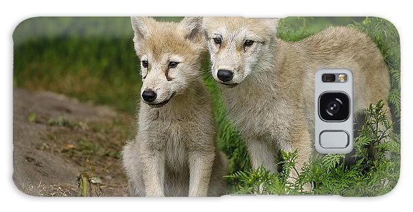 Arctic Wolf Puppies Galaxy Case