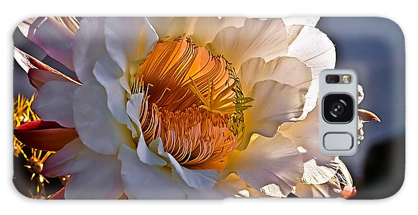 Cacti Galaxy Case - Argentine Giant II by Robert Bales