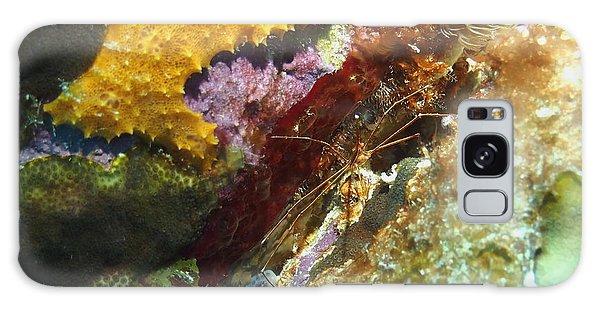 Arrow Crab In A Rainbow Of Coral Galaxy Case by Amy McDaniel