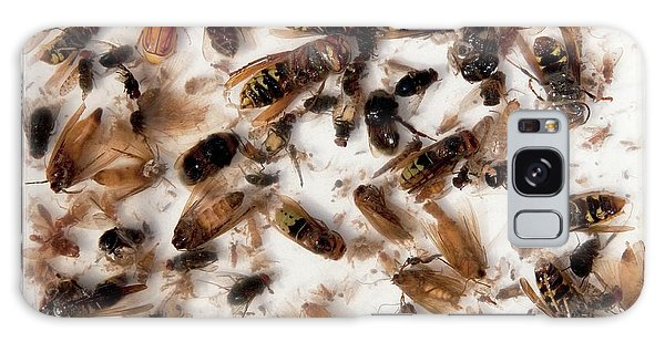 Drown Galaxy Case - Asian Hornet Research by Pascal Goetgheluck/science Photo Library