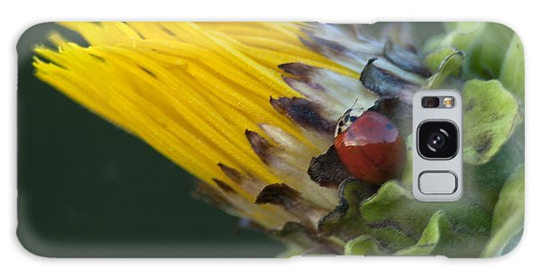 Asian Ladybug On Mock Sunflower Galaxy Case