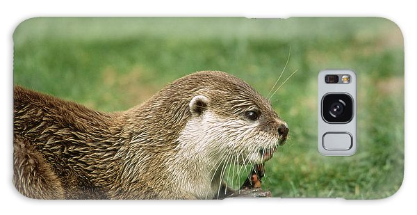 Otter Galaxy Case - Asian Short-clawed Otter by Duncan Shaw/science Photo Library