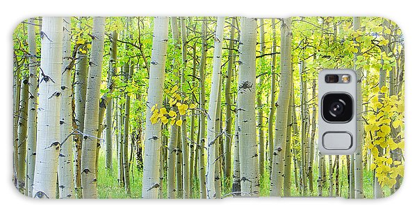 Aspen Tree Forest Autumn Time  Galaxy Case