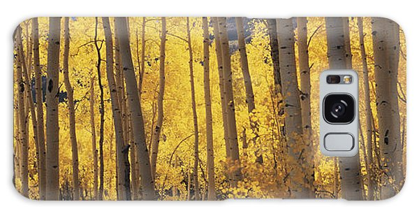 Aspen Trees In Autumn, Colorado, Usa Galaxy Case