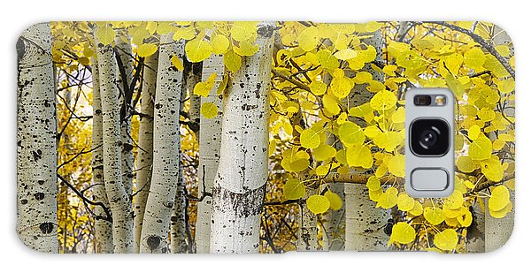 Teton Galaxy Case - Aspens At Autumn by Andrew Soundarajan