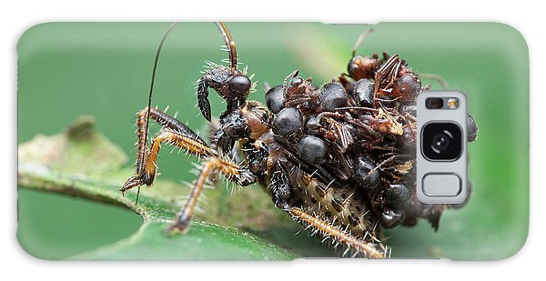 Assassin Bug Nymph With Ants Galaxy Case