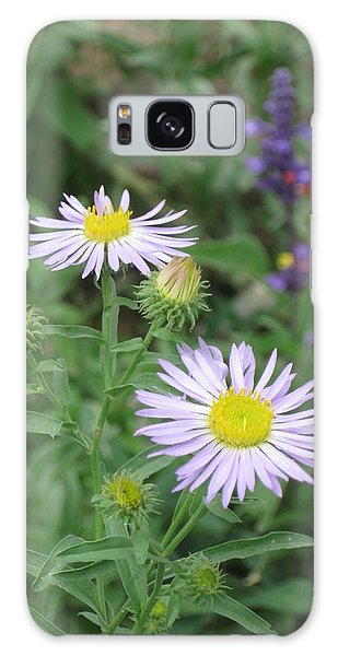 Asters In Close-up Galaxy Case