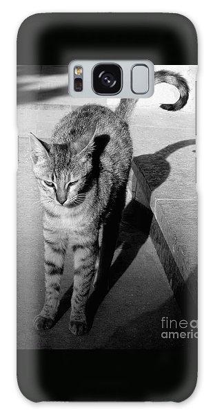 Aswan Cat Galaxy Case