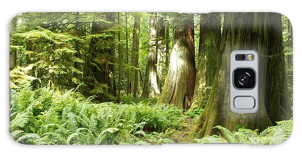 At Cathedral Grove Galaxy Case