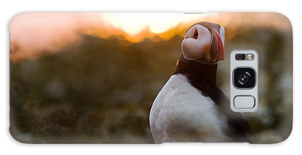 Atlantic Puffin At Sunrise Skomer Galaxy S8 Case