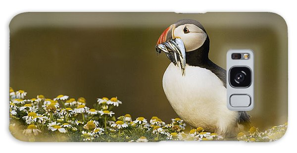 Atlantic Puffin Carrying Fish Skomer Galaxy S8 Case