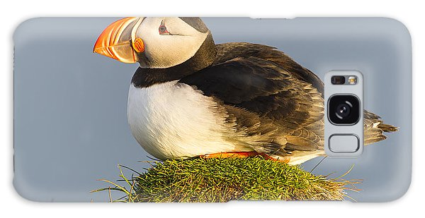 Atlantic Puffin Iceland Galaxy Case