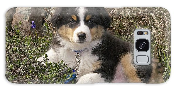 Australian Shepherd Puppy Galaxy Case