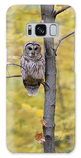 Autumn Barred Owl Galaxy Case