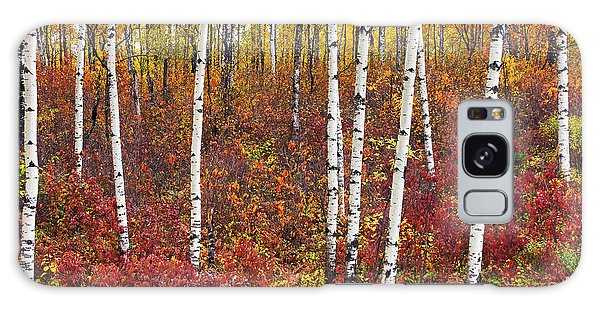 Autumn Birches Galaxy Case