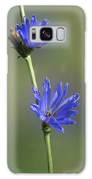 Autumn Chickory Galaxy Case