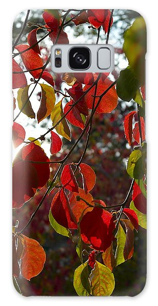 Autumn Dogwood In Evening Light Galaxy Case