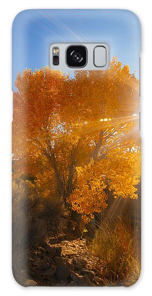Autumn Golden Birch Tree In The Sun Fine Art Photograph Print Galaxy Case by Jerry Cowart