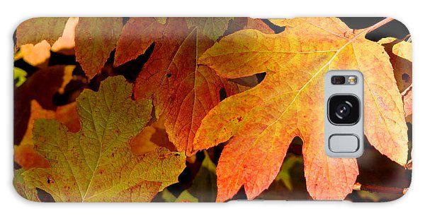 Autumn Hues Galaxy Case by Living Color Photography Lorraine Lynch