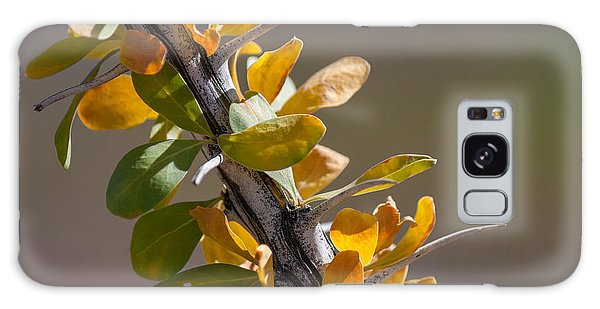 Autumn Ocotillo Galaxy Case by Beverly Parks