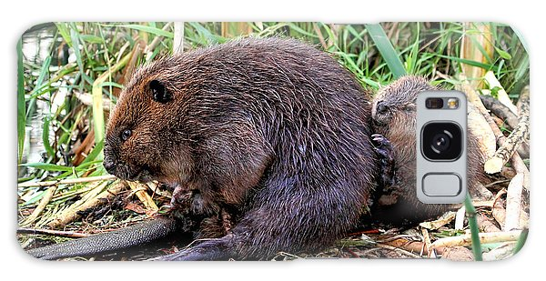 Baby Beaver With Mother Galaxy Case by Peggy Collins
