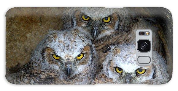 Baby Big Horned Owls Galaxy Case