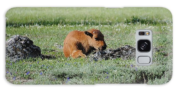 Baby Bison Napping Galaxy Case