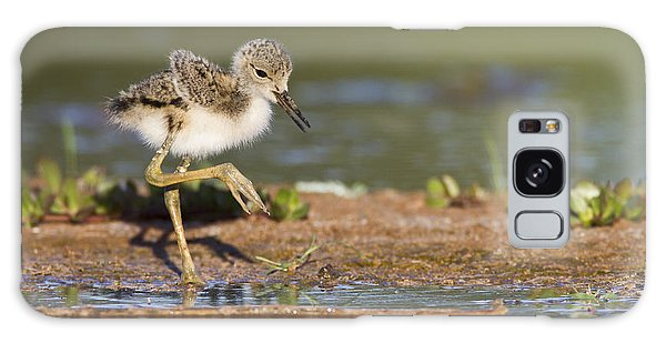 Baby Black-necked Stilt Exploring Galaxy Case