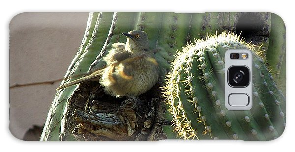 Baby Chick In Sahuaro Cactus Galaxy Case