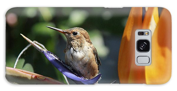 Baby Hummingbird On Flower Galaxy Case