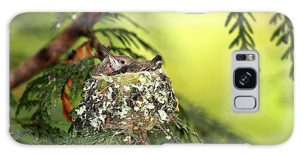 Baby Hummingbirds In A Nest Galaxy Case by Peggy Collins