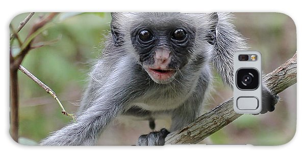 Baby Red Colobus Monkey Galaxy Case by Tony Murtagh