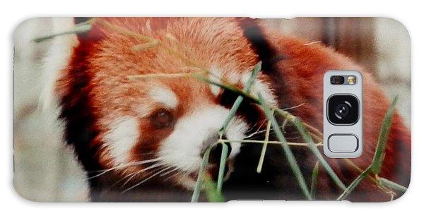 Baby Red Panda Bear Galaxy Case by Belinda Lee