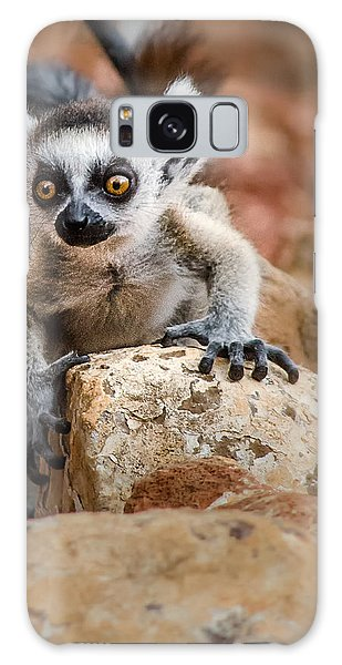 Baby Ringtail Lemur Galaxy Case by Linda Villers