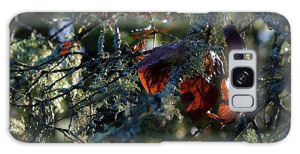 Back Lit Autumn Leaves Galaxy Case by Joanne Smoley