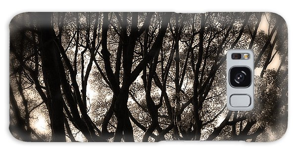 Backlit Branches Of A Majestic Tree II Galaxy Case