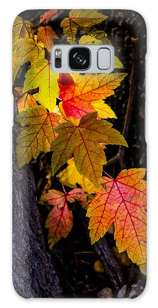 Backlit Leaves Galaxy Case by Janis Knight