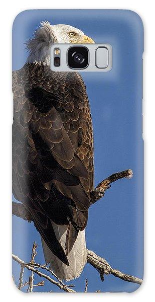 Bald Eagle 1 Galaxy Case